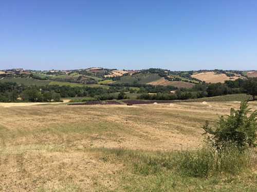 plot of land for sale le marche Italy